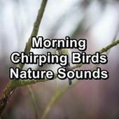 Morning Chirping Birds Nature Sounds by Bird Sounds 2016