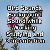 Bird Sounds Background Sound while Working Studying and Concentration by The Birds