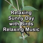 Relaxing Sunny Day with Birds Relaxing Music fra Nature