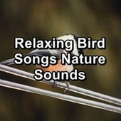 Relaxing Bird Songs Nature Sounds by Singing Birds