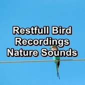 Restfull Bird Recordings Nature Sounds by S.P.A