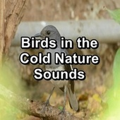Birds in the Cold Nature Sounds von Yoga Tribe