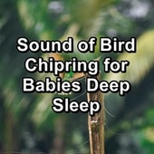 Sound of Bird Chipring for Babies Deep Sleep by Loopable Birds