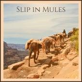 Slip in Mules de Various Artists