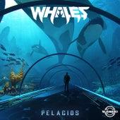 Pelagios by Whales