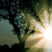 Requiem in D minor K. 626: Lacrimosa by Mark Lr