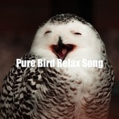 Pure Bird Relax Song fra Animal and Bird Songs (1)