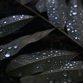 The Gentle and Calming Sound of Rain (Loop) de Zen Meditate