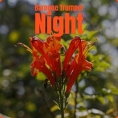 Baroque Trumpet Night by Various Artists