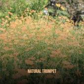 Natural Trumpet de Various Artists