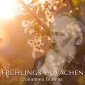 Frühlings Erwachen (432 HZ) by Johannes Brahms