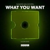 What You Want de Sander Van Doorn