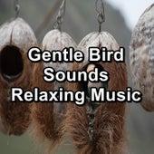 Gentle Bird Sounds Relaxing Music von Yoga