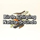 Birds Chirping Nature Sounds fra Relaxing Rain Sounds