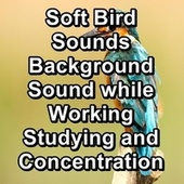 Soft Bird Sounds Background Sound while Working Studying and Concentration by Serenity Spa: Music Relaxation