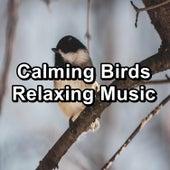 Calming Birds Relaxing Music fra Nature