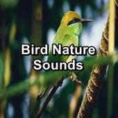 Bird Nature Sounds von Yoga Music