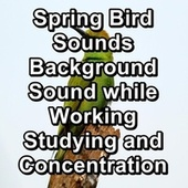 Spring Bird Sounds Background Sound while Working Studying and Concentration fra Animal and Bird Songs (1)