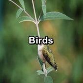 Birds by Bird