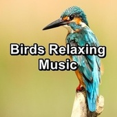 Birds Relaxing Music by Meditation Spa