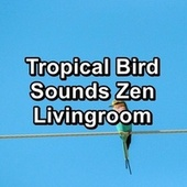 Tropical Bird Sounds Zen Livingroom by Rain Radiance