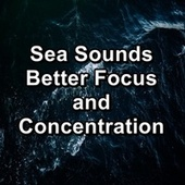 Sea Sounds Better Focus and Concentration de Yoga Tribe