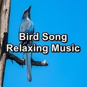 Bird Song Relaxing Music de Yoga Tribe