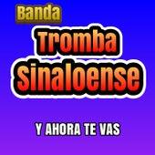 Y ahora te vas de Banda Tromba Sinaloense
