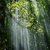 Spiritual Remedy by Forestia