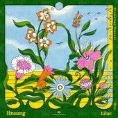 Lilac fra Jinsang