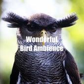 Wonderful Bird Ambience fra Animal and Bird Songs (1)
