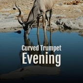 Curved Trumpet Evening by Various Artists