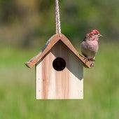 More Birds de Sounds Of Nature