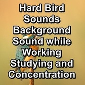 Hard Bird Sounds Background Sound while Working Studying and Concentration by Yoga Music