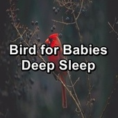 Bird for Babies Deep Sleep by Spa Relax Music