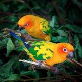Birds just Birds de Sounds Of Nature