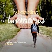 Mi Destino Está en Tus Manos von Seminario de Chihuahua