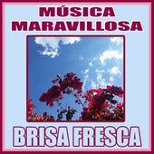 Música Maravillosa. Brisa Fresca de Orquesta Lírica Barcelona