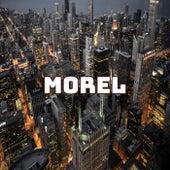 Morel by Morel
