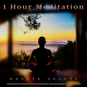 1 Hour Meditation: Ambient Music and Bird Sounds For Meditation, Relaxation, Sleeping Music, Yoga, Spa, Massage, Healing and Wellness by Meditation Music