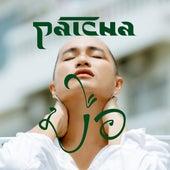 มือ von Patcha
