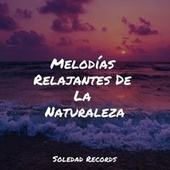 Melodías Relajantes De La Naturaleza de Dormir