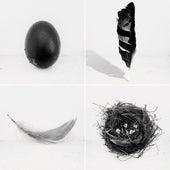 The Singles by Lady BLACK BIRD