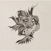 United Sparrows de FLOW