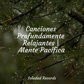 Canciones Profundamente Relajantes | Mente Pacífica de Canciones Para Niños