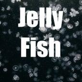 Jelly Fish von Fishbone