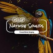 Forest Birds Singing fra Nature Sounds (1)