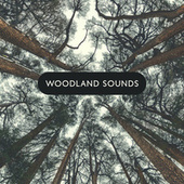 Woodland Sounds: Beautiful Piano & Nature Melodies by Relaxing Piano Music Consort