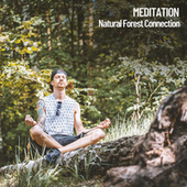 Meditation: Natural Forest Connection by Spa Music (1)