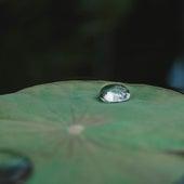 Sonidos Relajarse Y Serenidad de Fabricantes de Lluvia